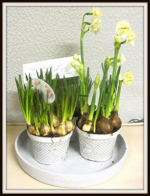 Blomster fra kunde feb-14